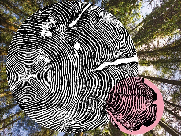 Tree rings on forest backdrop